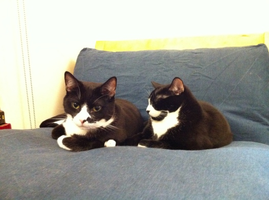 Yen's cats